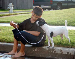 Children and Jack Russell Terriers