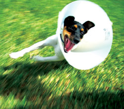 Medical: Caring for your Jack Russell