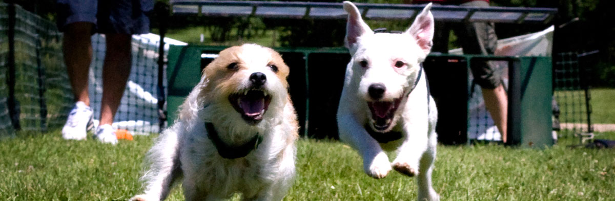 Bad Dog Talk for Jack Russell Terriers