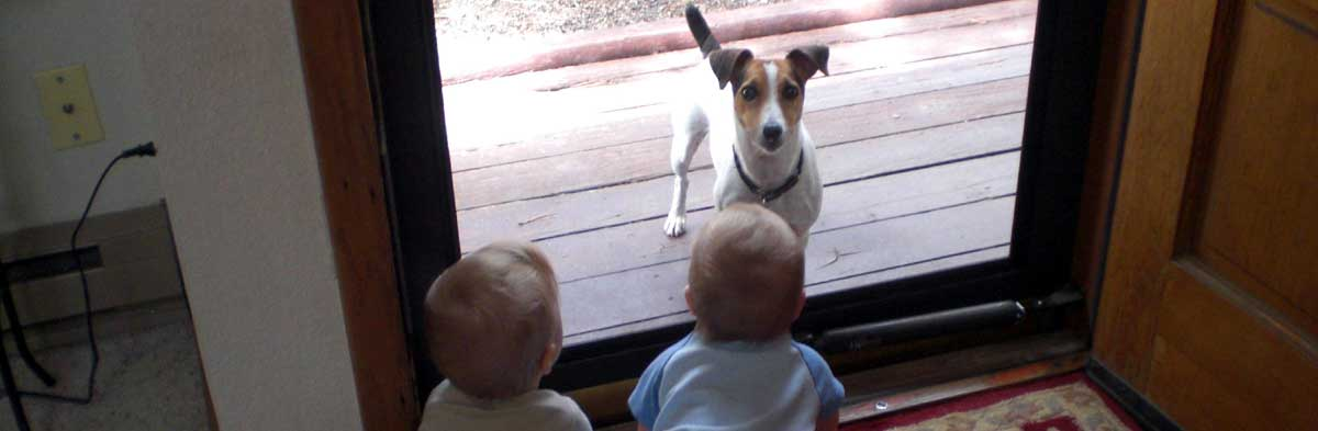 Jack Russells and Children