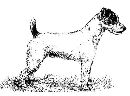 coloring pages of rat terriers - photo#20